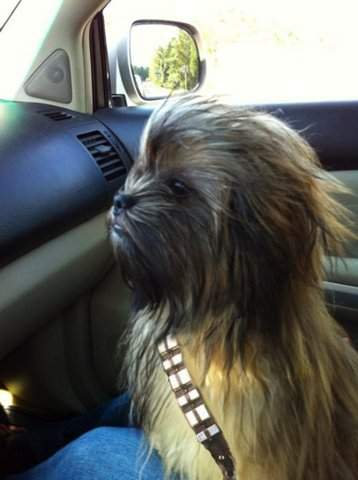 Chewbacca_dog_ritalin_leon
